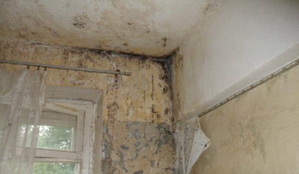 Грибок на стенах по причине влажности помещения