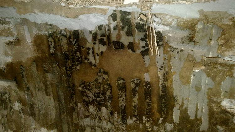Пораженная грибком стена