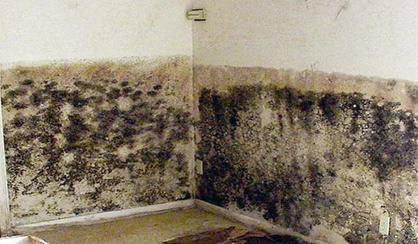 Обширное поражение стены грибком